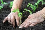 Strengthens Your Immune System gardening