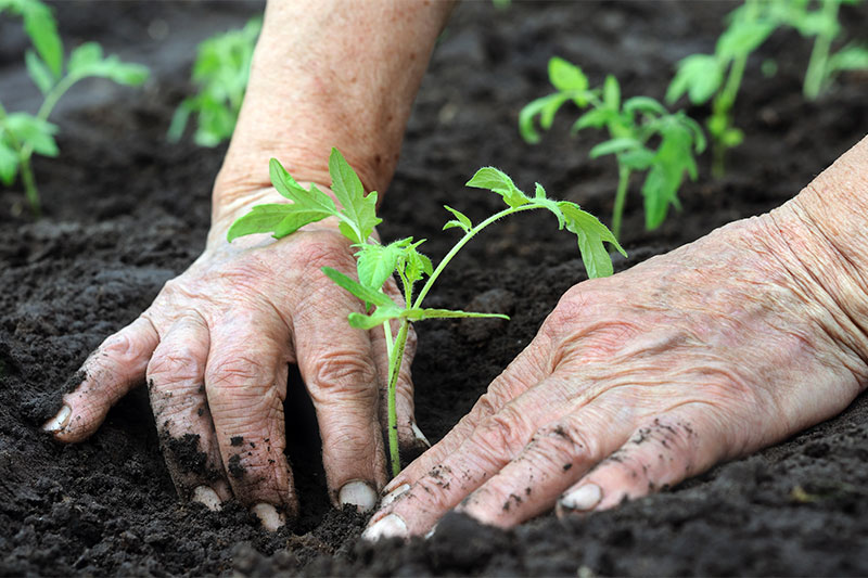 Strengthens Your Immune System gardening